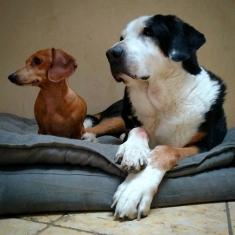 Doggies - Doggies